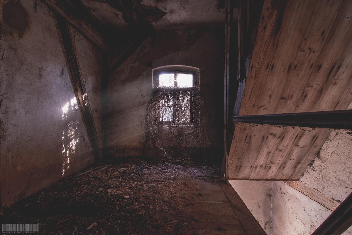 Verwuchertes Fenster